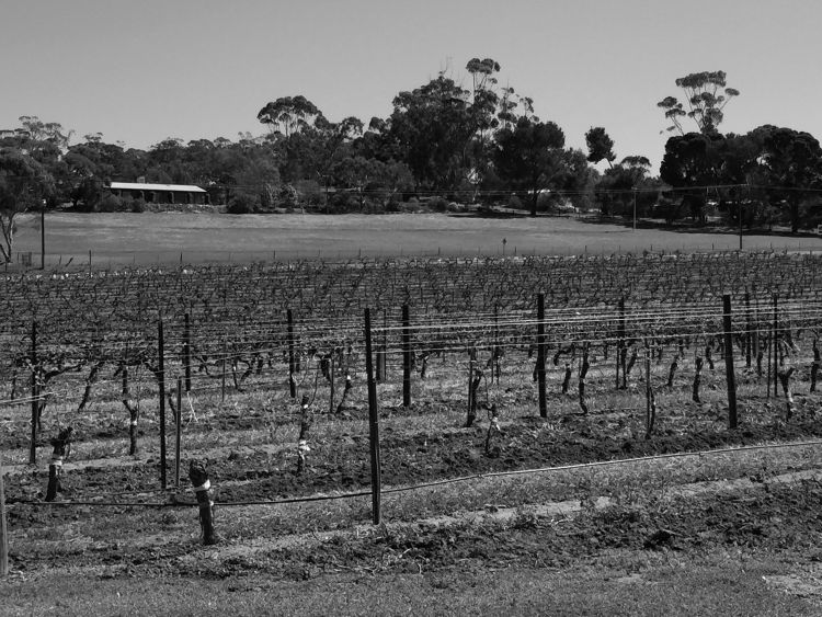 barossa black and white 750